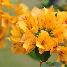 100 шт цветные бугенвиллеи балконные горшки, Дворовые бонсай цветочное растение очень эффектное, цветочное выносливое растение