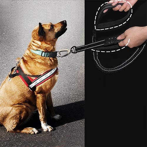 Pet Proof Punch Hand Holding Rope Dog Hand Holding Rope Dog Collar Plans To Sample