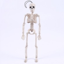 Novelty Cool Skeleton Mister Bride Human Model Skull Body Figure Toy Halloween(China)