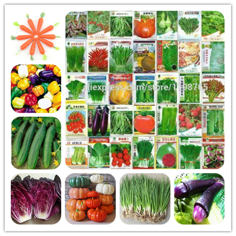 Four Seasons 100 Pcs Vegetable Bonsai Cucumber Eggplant Pepper Pumpkin Cabbage Shallot Carrot Tomato Balcony Garden Pot Plant