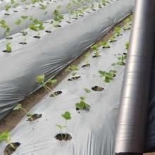 Plastic-Film Weed-Control Orchard Greenhouse Fruit-Tree Reflective Garden Silver-Black