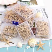 Caja de conchas marinas de estrella de mar Natural, artesanía de playa, estrellas marinas naturales, decoración de boda, Crafts1-5cm artística de resina epoxi