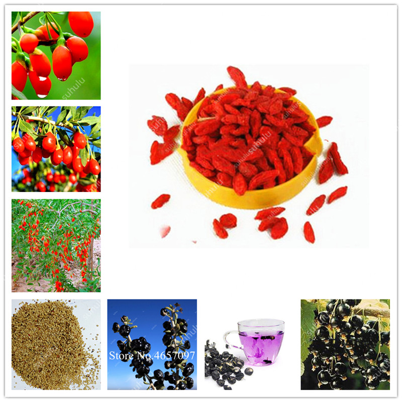 2000Pcs 100% Genuine Black And Red Goji Berry Chinese Wolfberry Bonsai Herbs Bonsai Potted Plant Home Garden Outdoor House Plant