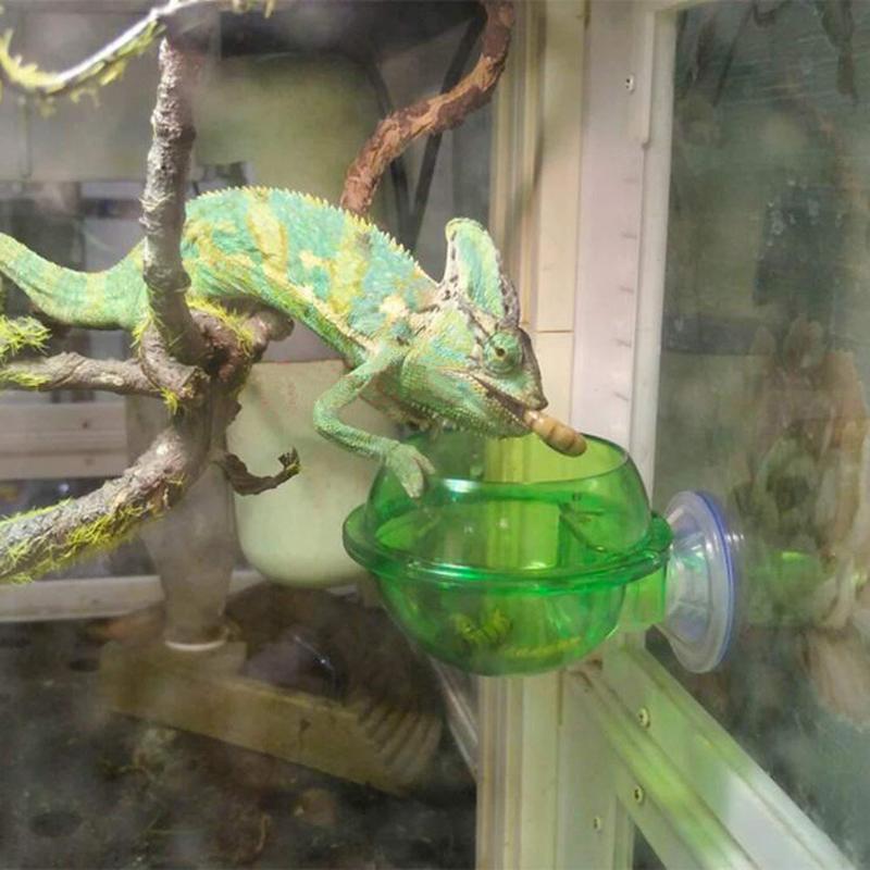 The Crawler Supplies Feeders Chameleon Lizard Sucker Supplies New Pet