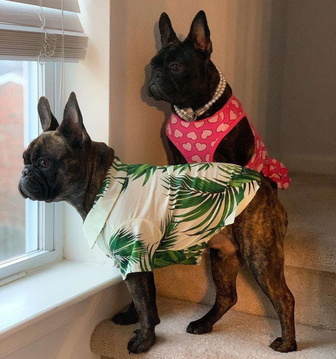 hawaiian shirt for dog