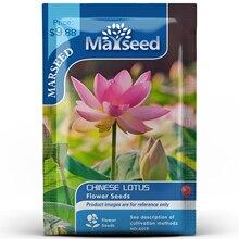 American Heirloom MARSEED Chinese Lotus Flower  Seedsplants Seedling Garden Outdoor