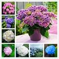 15 шт., Ароматические семена гортензии, бонсай, домашний цветок, натуральные растения, садовая ароматная маска для губ с большими листьями го...