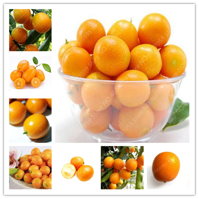 Promotion ! 10 Pcs Balcony Patio Fruit Trees Kumquat Bonsai Garden Orange Flores Tangerine Dwarf Citrus Juicy Orange Fruit Tree