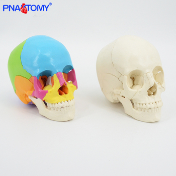 22 parts colored 1:1 life size human detachable skull model head anatomy assembly medical teaching tool dentist used oral cavity 1 1 pvc high quality cardiac anatomy model medical teaching tool art tool instructional tool clinic figurines