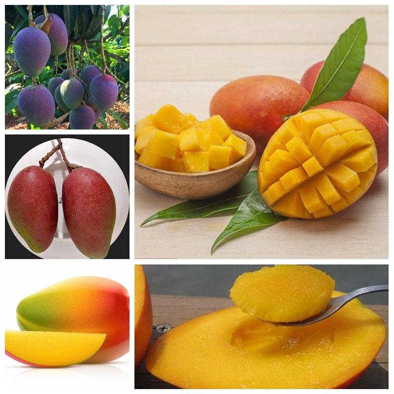 1 Pcs / Bag Rare Bonsai Fruit Tree Planta Mini Mango Plant Mango Tree Garden Diy Pot Planting Home Garden Semente For Flower Pot