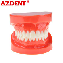 Modelo de dientes de prótesis Dental, mandíbula estándar, demostración de dentadura, modelo de enseñanza, simulador de dentista, herramientas de técnico