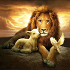 Sheep and Lion Peace...