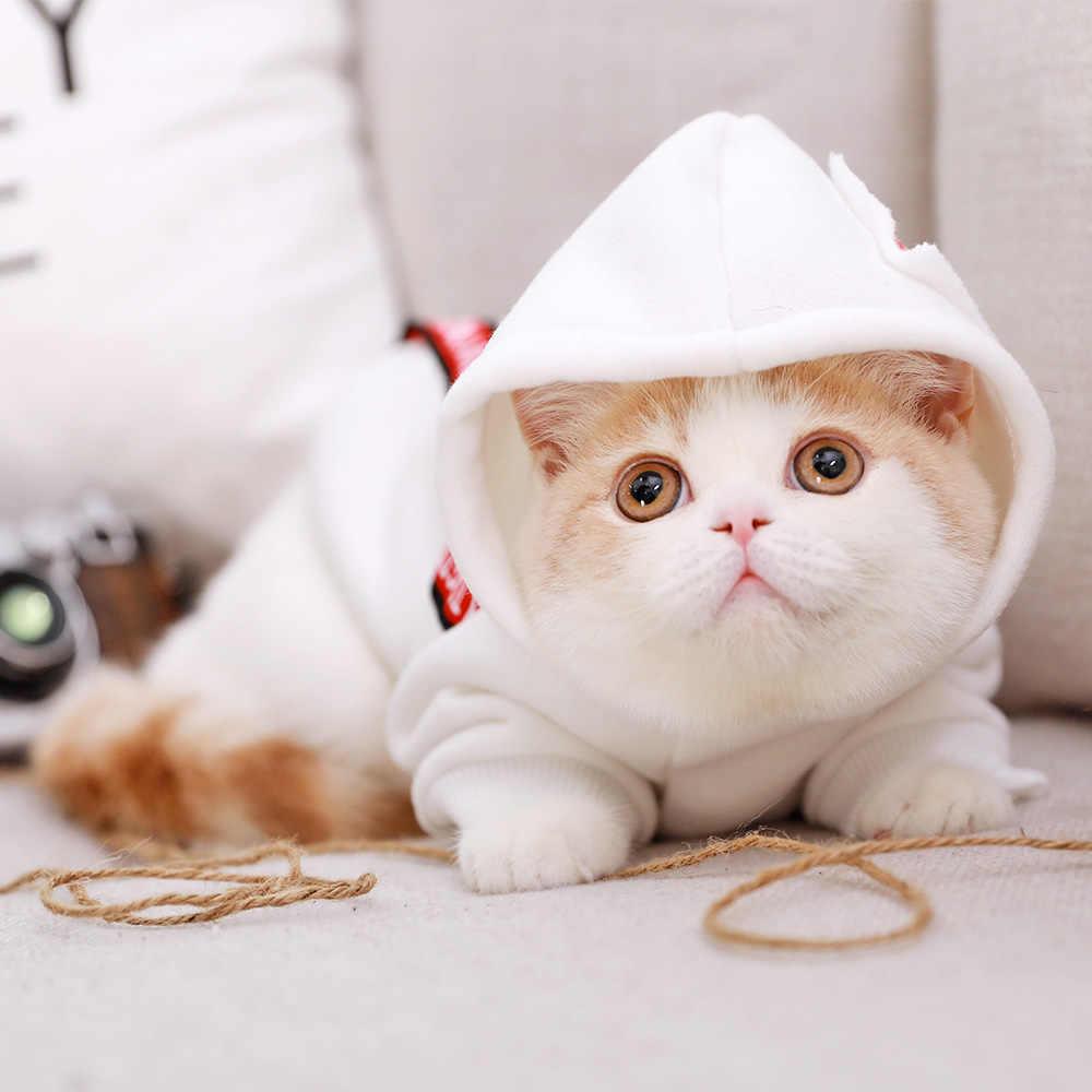 Ropa para perros y gatos ropa suéter francés ropa para perros y gatos ropa para Bulldog con orejas de oso suéter de lana para mascotas BB5WY012