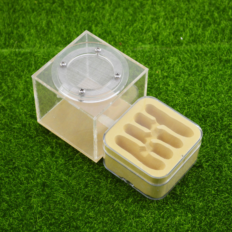 Plaster Ant Nest Acrylic Ant Farm Ants Queen House Insect Cage Anthills Pet Ant House Granja De Hormigas Hormiguero