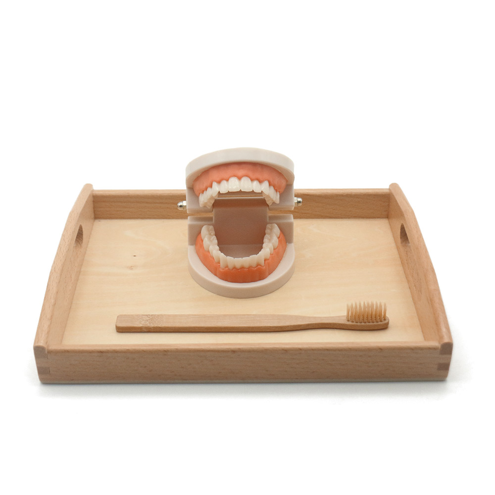Toddler Montessori Practical Life Material Simulated Tooth Toy Brushing Tooth Teaching Aids Bamboo Brush with Wooden Tray L1064H Toys