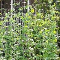Malla 5/10m red de poliéster esponja para la mañana Glory flores de la vid plantas de jardín escalada pepino vid Grow Holder Jaulas y soportes de plantas     -