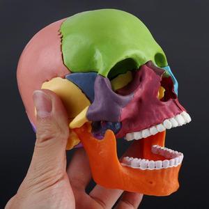 Image 5 - 15 sztuk/zestaw 4D zdemontowany kolorowa czaszka Model anatomiczny odpinany medyczne narzędzie do nauczania