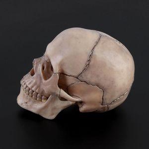 Image 3 - 15 pçs/set 4D Desmontado Modelo Anatômico Crânio Destacável Ferramenta de Ensino Médico