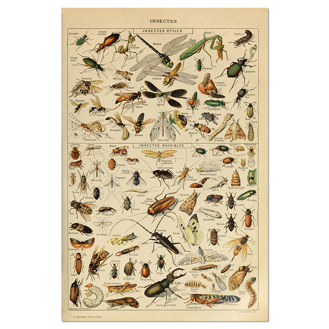 Animal-Botanical-Educational-Vintage-Poster-Butterfly-Posters-and-Prints-Fruit-Canvas-Painting-Vegetable-Picture-on-The.jpg_640x640 (5)