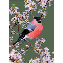 Full Square Drill 5D DIY Diamond Painting Cross Stitch Flower bird Diamond Embroidery landscape mosaic Rhinestones picture M952(China)