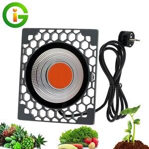 Image 1 - Led Grow Light 500W Volledige Spectrum Hoge Lichtopbrengst 50W Cob Phyto Lampen Voor Indoor Plant Zaailing Groeien en Bloem