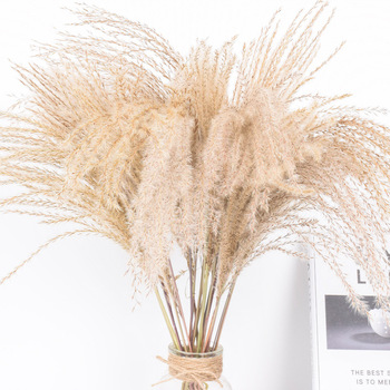 Real Dried Small Pampas Grass Wedding Flower Bunch Natural Plants Home Decor Dried Flowers Phragmites Flower Ornamental 1