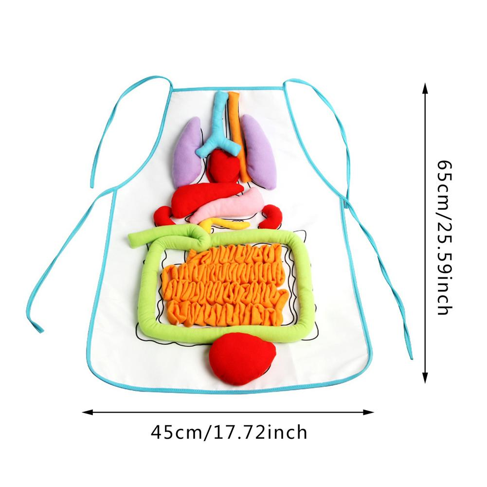 Brinquedos educativos criativos para crianças anatomia avental