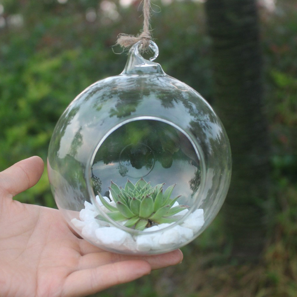 Transparent Wall Hanging Flower Glass Planter Ball Shape Vase Terrarium