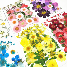 Pressed Flower Mixed Organic Natural Dried Flowers DIY Art Floral Decors Collection Gift  FreeShipping