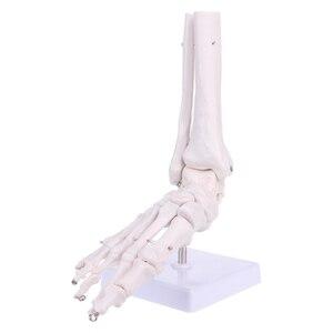 Image 4 - Modelo anatómico de la articulación del pie derecho, tamaño real 1:1, modelo de cirugía de la mano y el pie