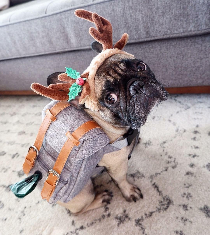 dog backpack harness