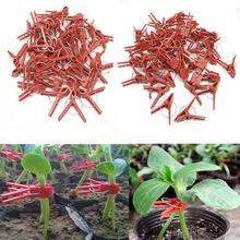 Clip de greffage en plastique à bouche ronde, 50 pièces, Support de plante de jardin pour légumes, fleurs, tiges de tomate, fixer la croissance verticale