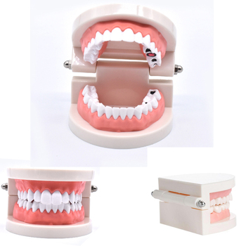 1 pcs Teeth Model Standard Tooth Teaching Dental Child Kid training Model Disease Teeth Medical Model Disease Teaching Study dental premature disease teeth model transparent caries pathological demonstration tooth child study teaching showing 2018