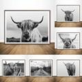 Черно-белый настенный постер Highland Cow, шотландский крупный рогатой животный, холст, настенная живопись без рамки, современная картина