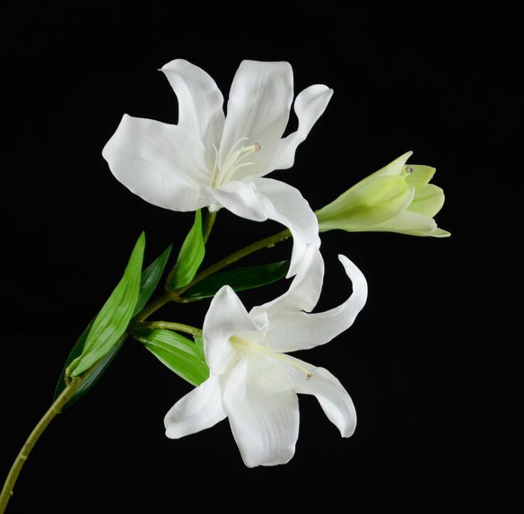 Amosfun 3pcs s/éch/ées Fleur de Roseau Naturelles Fleurs s/èches Petite Herbe de Pampa Fleurs s/éch/ées Bouquet pour Bureau /à Domicile de Mariage de no/ël d/écor Rose