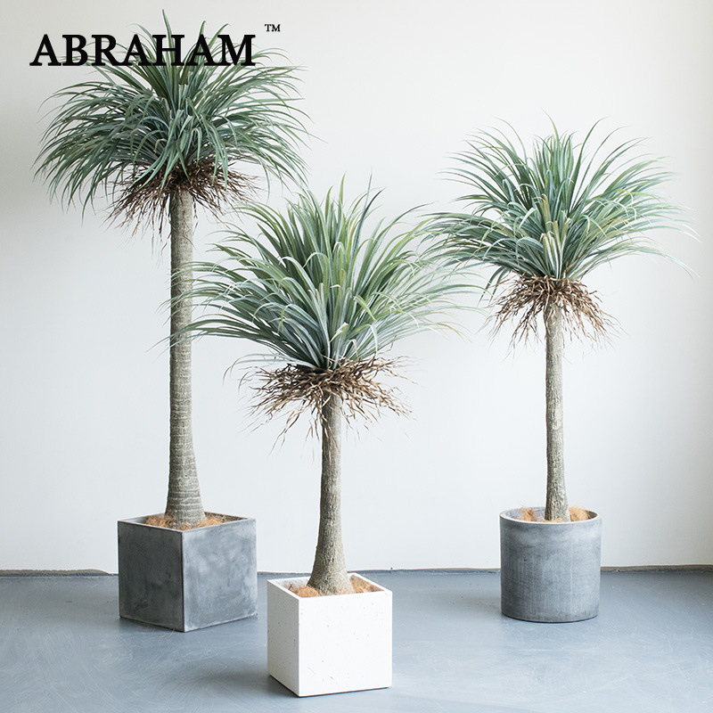 US $807.37 36% OFF|230cm Plastic Tropical Plants Large Artificial Tree on house plant schefflera arboricola, house plant palm care, bamboo tree, house plant flower, house plant orchid, house plant swedish ivy, yucca house plant tree, house plant arrow, house plant rubber plant, house plant grass, house plants that look like trees, low maintenance indoor plants tree, house plant pineapple, house plant house, house plant with green leaves and white, corn house plant tree, house plant umbrella tree, house plant bamboo, house plant propagation, house plant pink,