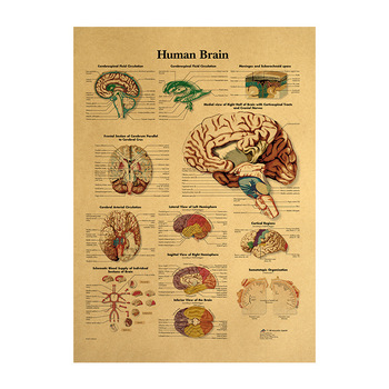 brain Vintage Poster Room Decoration Medical Posters Stickers Home Decor Wall Art Retro Kraft Paper Wall Sticker 42*30cm image