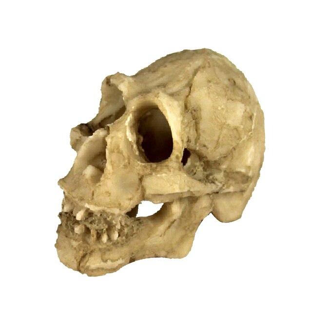 Reptile, forme de tête de crâne   Serpent, tortue, Vivarium Rock, grottes, décor daquarium