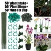 Plastic Stem Clips Garden Mini Orchid Plant Support Stalks Flower Tools Outdoor Home Garden Plant Care Soil & Accessories