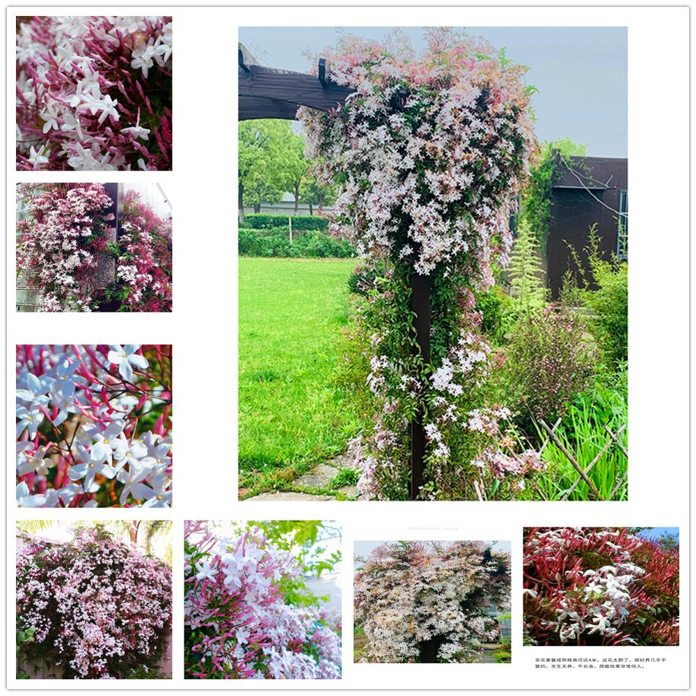 Plant Flower Bath Salts Snowflake Jasmine Essence 100Pcs XZZ-198