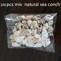 100 шт. красивые пляжные разные морские ракушки настоящие морские ракушки разные морские ракушки морские рыбы ракушки крафтовые ракушки акв...