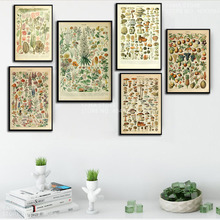 J051 ilustración de frutas vegetales botánicos Vintage carta ciencia regalo pared arte decoración pintura póster impresiones lienzo