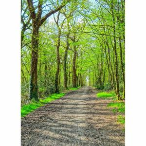 Image 3 - Spring Tree Pathway Green Photo Backdrops Photo Studio Vinyl Backgrounds Photography Props for Children Portrait Photobooth