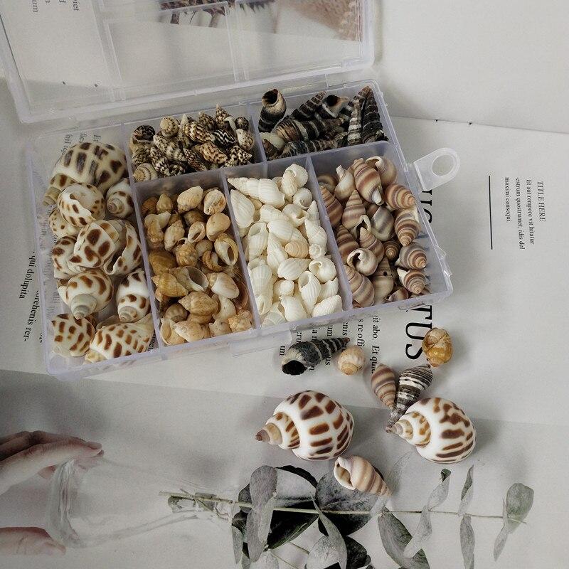 Hot New 200Pcs/Box Natural  Conch Shells Conch Corn Screw Wall Decoration DIY Aquarium Landscape Seashells Crafts Party Factory