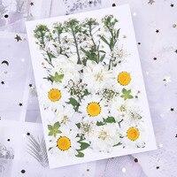Conjunto de flores secas reales flores prensadas naturales manualidades de múltiples Arte colorido para decoración del hogar