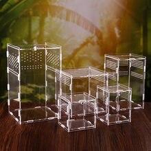 Répteis de répteis caja de acrilico arana lagarto escorpion entis acrilico montados insectos transpiráveis terrário transparente