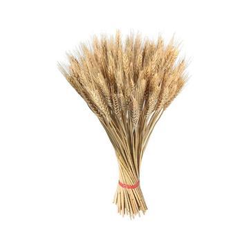 100 sztuk suszonych łodyg pszenicy ucha kwiat złoty naturalne suszone bukiety pszenicy na wesele dekoracji DIY Craft księga gości tanie i dobre opinie CN (pochodzenie) dry flower Suszone kwiaty Other Płatki Na imprezę Z tworzywa sztucznego 100PCS Dried Wheat Stalks Golden Natural Dried Wheat Sheaves