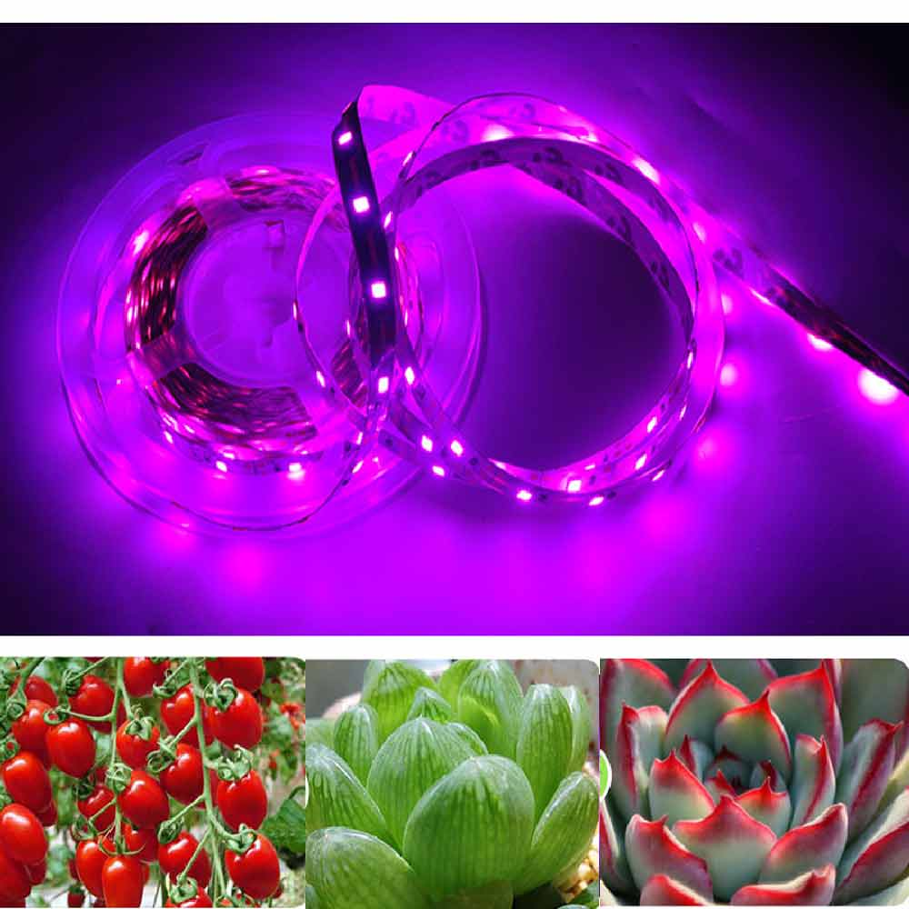 LED Grow Light LED Strip Light 1m 2m 3m 5m Full Spectrum Chip SMD 2835 LED  Phyto Lamp For Greenhouse Hydroponic Plant Growing|LED Grow Lights| -  AliExpress