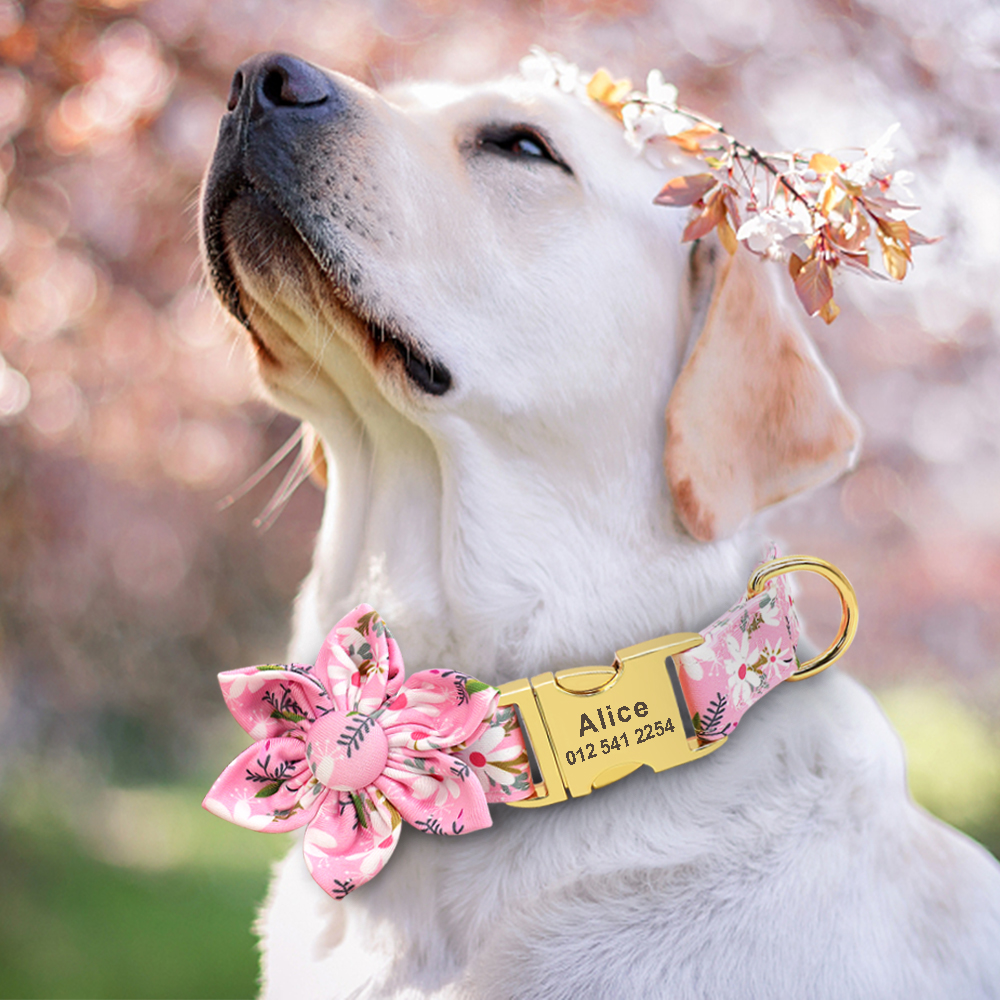 Personalized Dog Collar With Bow