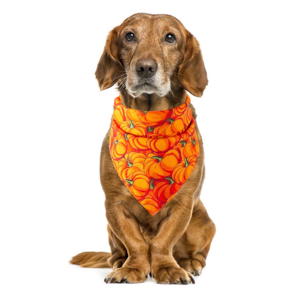 Accesorios de disfraz para mascotas 5